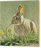 Dandi-nibbler Wood Print