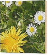 Dandy With The Daisies Wood Print