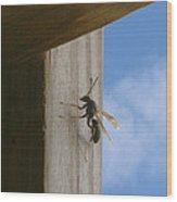 Danger At The Window Wood Print