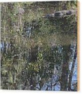 Dangerous Swimming Wood Print