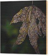 Dangling Dark Sweetgum Wood Print