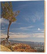 Danse Sur Pointes Wood Print by Alex Cassels