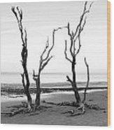 Dancing Trees Wood Print by Thomas Leon