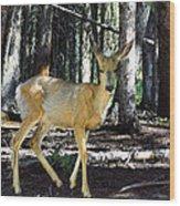 Dappled In Light Wood Print