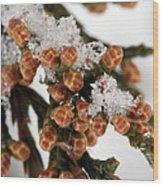 Darby Spring Wood Print