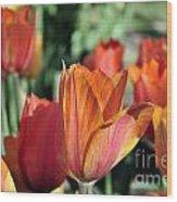 Darby's Tulip 5161 Wood Print