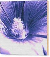 Dark Blue Mallow Wood Print