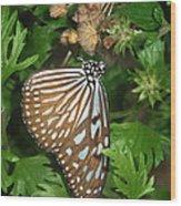 Dark Blue Tiger Butterfly Wood Print