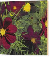 Dark Coreopsis' Wood Print