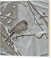 Dark-eyed Junco Or Snowbird - Junco Hyemalis Wood Print