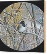 Dark- Eyed Junco Wood Print