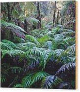 Dark Ferns Wood Print