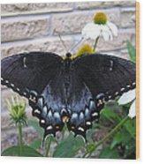 Dark Form Female Tiger Swallowtail Wood Print