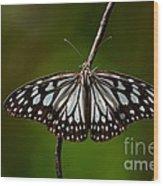 Dark Glassy Tiger Butterfly On Branch Wood Print