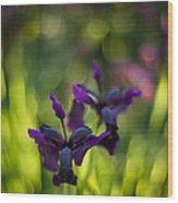 Dark Irises Wood Print