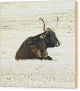 Dark Longhorn Wood Print