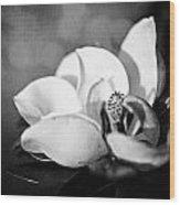 Dark Magnolia Wood Print