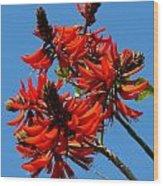 Dark Orange Coral Blossom Wood Print