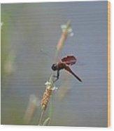 Dark Red Dragonfly Wood Print