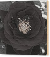Dark Rose Wood Print
