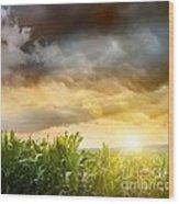 Dark Skies Looming Over Corn Fields  Wood Print