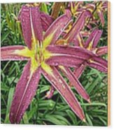 Dark Star Daylilies Wood Print