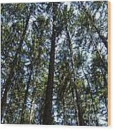 Dark Trees Wood Print
