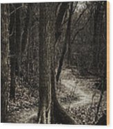 Dark Winding Path Wood Print