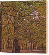 Darker Textured Autumn Trees Wood Print