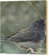 Darkeyed Junco  Wood Print