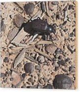 Darkling Beetle And Moqui Marbles Wood Print