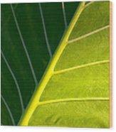 Darkness And Light - Elephant Ear Leaf Details Wood Print