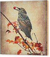 Darling Starling Wood Print