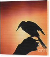 Darter Silhouette With Misty Sunrise Wood Print
