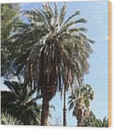 Date Tree At The Arboretum Wood Print