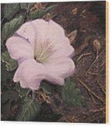Datura Desert Lily Wood Print