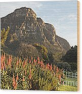 Dawn At Kirstenbosch Wood Print