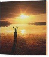 Dawn's Golden Light Wood Print
