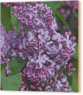 Dawns Lilacs Wood Print