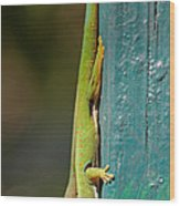 day geckos from Madagascar 1 Wood Print