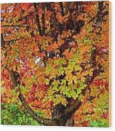Day Glo Autumn Wood Print