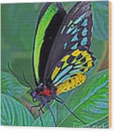Day-glo Butterfly Wood Print