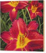 Day Lilies Wood Print by Adam Romanowicz
