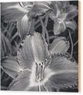 Day Lilies In Black And White Wood Print by Adam Romanowicz