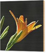 Day Lily 1 Wood Print