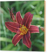 Day Lily 3648 Wood Print