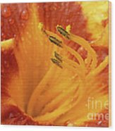 Day Lily In The Rain - 688 Wood Print