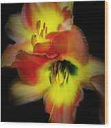 Day Lily On Black Wood Print