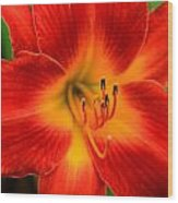 Day Lily1 Wood Print