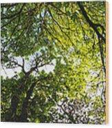 Daydreaming In The Hammock Wood Print